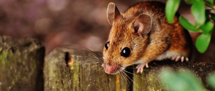 Common Autumn Pest Problems In New Orleans