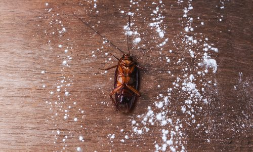 Answers to Common Pest Control Questions