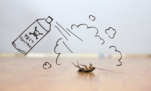 Questions to Ask When Hiring a Pest Control Service