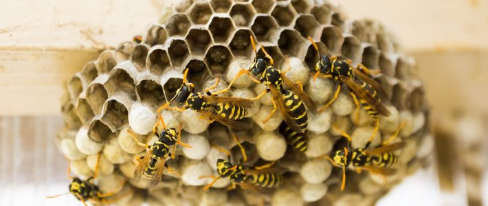 How to Prevent Wasp Nests on Your Louisiana Property