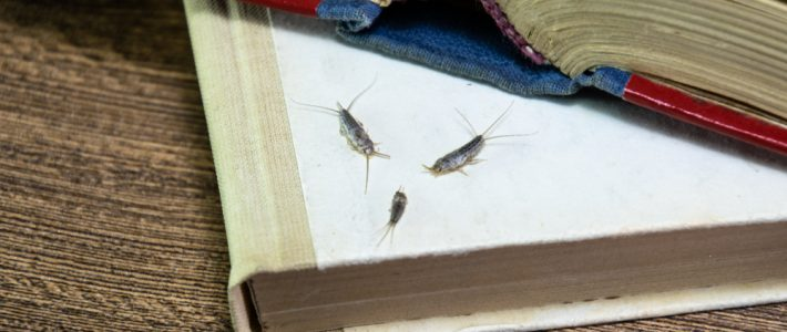 Tips To Reduce & Remove Silverfish From Your Home
