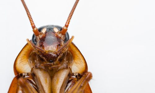 Roach Facts & Prevention Tips!