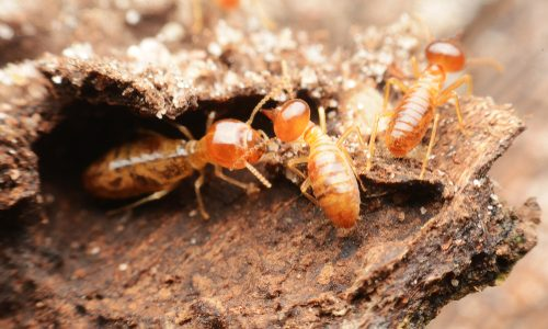 Taking Care Of Termites This Spring