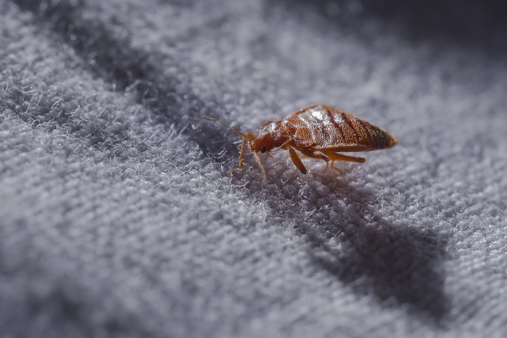 new orleans bed bug removal