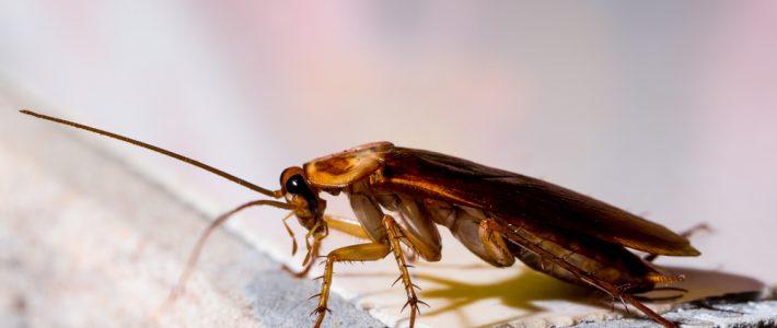 New Orleans Pest Prevention Tips For 2021