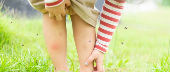 How To Prevent Mosquitoes This Summer