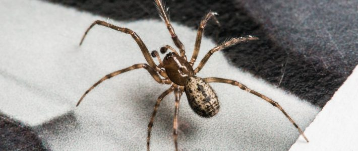 Tips On Getting Spiders Out Of Your Home
