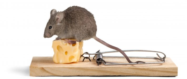 How To Remove Rodents From Your Home